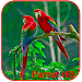 Parrots HD Live Wallpaper Icon