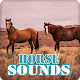 Download Horse Sounds Ringtone Collection For PC Windows and Mac