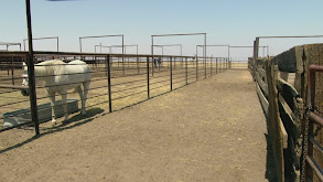 Autonomy Farms & Too Pretty thumbnail