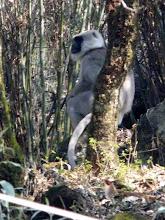 Photo: Im Wald hausen die Affen