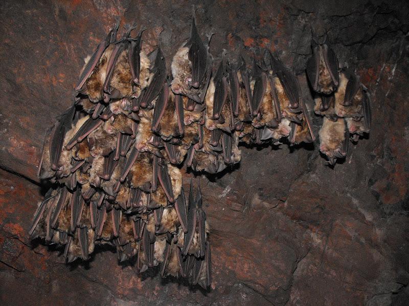 L'armata dei vampiri di LucaMonego