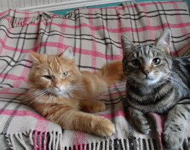 Photo: Here are two adorable cats, Simba and Poppy, relaxing on a Brora random rug. Thank you Sam for sending in this great photo!