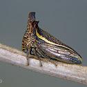 Brown horned treehopper