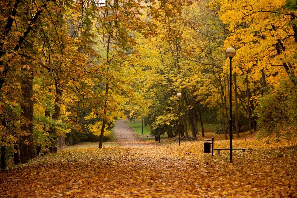 Park Fosa, Stoki Cytadeli