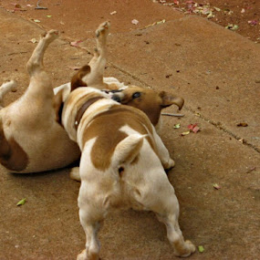 Mrs by Tersia Maree - Animals - Dogs Playing