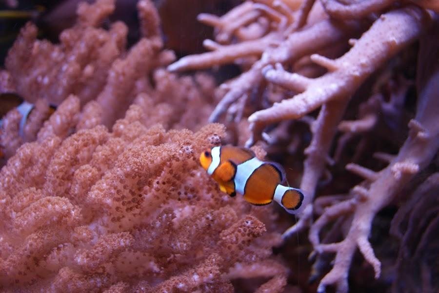 by Nbjbj Hbjhv - Landscapes Underwater ( water, corals, fish, sea, nemo, world )