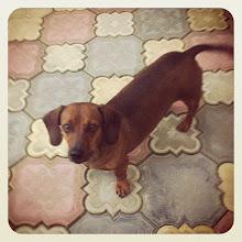 Photo: Pet portrait #dog #romania #intercer #pet - via Instagram, http://instagr.am/p/MC0DHKpfs6/