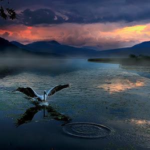 !!!Swan-1.jpg