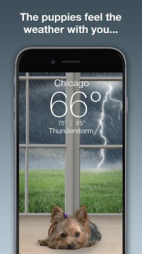 Weather Puppy - App & Widget Weather Forecast ss2