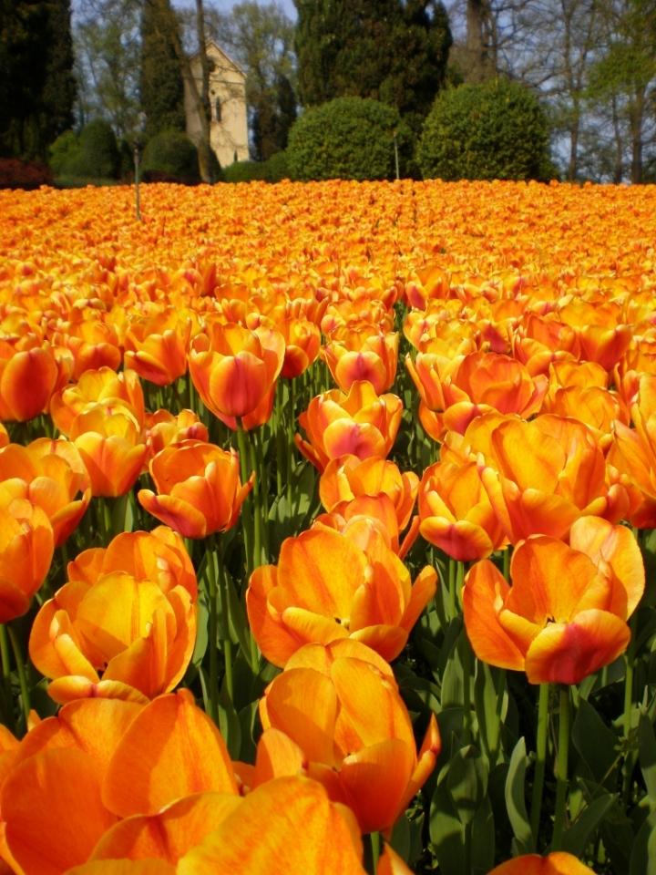 Naturalmente arancione di Alessandra Savi