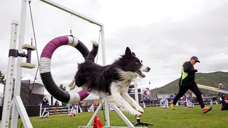 Watch 2018 Incredible Dog Challenge live