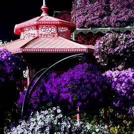 Flowery hideout by Nadeem M Siddiqui - City,  Street & Park  City Parks