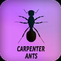 Carpenter Ants icon