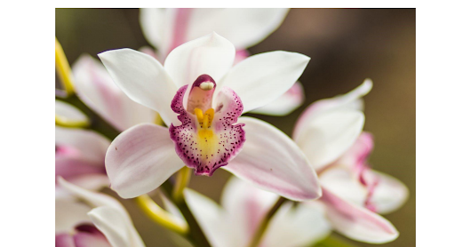 Get the Best Orchids by for Your Home by Following these Tips - Google Drive