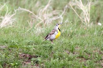 Photo: 07/06/2013 - Badlands - South Dakota - ??? Pretty Bird
