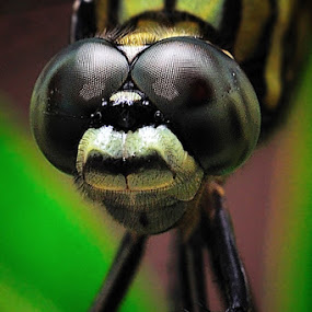 by Esron Panjaitan - Animals Insects & Spiders