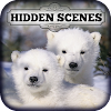 Hidden Scenes - Polar Bears