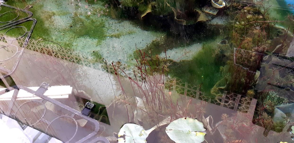 Fondo de nuestra piscina natural de la oficina