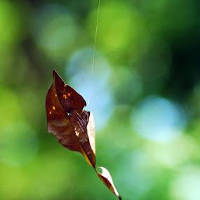 The Leaf by Enggus Fatriyadi - Nature Up Close Leaves & Grasses ( pwcfallleaves )