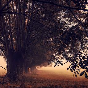Les Mystères de la Brûme by Serge Thonon - Landscapes Forests ( brouillard, nature, automne, d7000, brume )