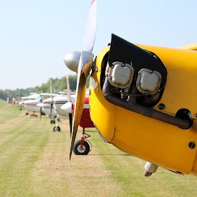 noses by Lina Turoci - Transportation Airplanes ( plane, propeller, nose )