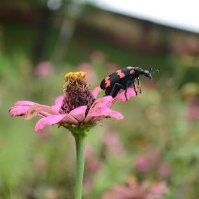 Rest on Flower by Sudip Das S Das - Nature Up Close Flowers - 2011-2013