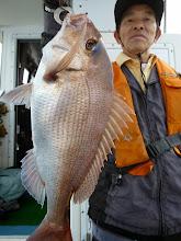 """Photo: いいサイズの真鯛! やったぜ、""""イワオさん""""!"""