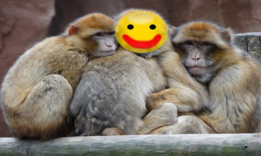 Funny Animal Photo Frame