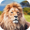 Animal King Lion Locker Theme icon