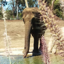 by Hayley W - Instagram & Mobile Android ( nature, outside, elephant, water, wildlife,  )
