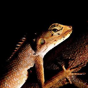 by Kay Eimza - Animals Reptiles