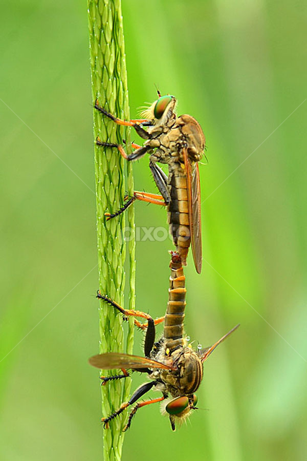 by Saiful El-Shyrazy - Animals Insects & Spiders