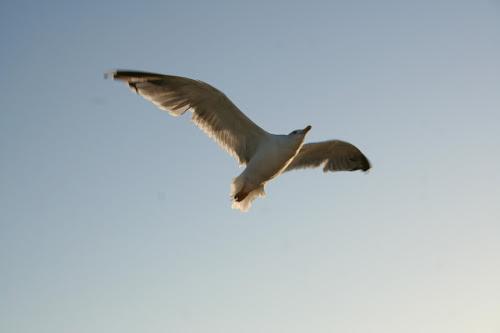 Volare oh oh di elebif