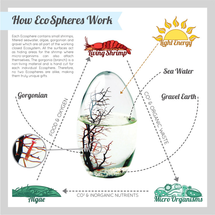 The flow of nutrients and waste products inside the EcoSphere.