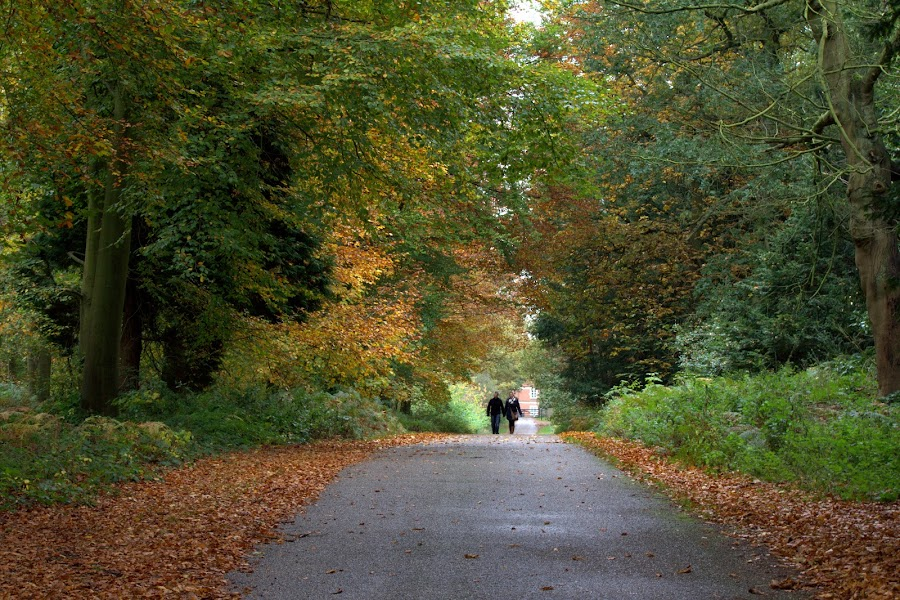 Autumnal Colours by Michael Topley - Landscapes Forests ( clumber park, uk, england, autumn, nottinghamshire, fall, path, trees, leaves, colours )