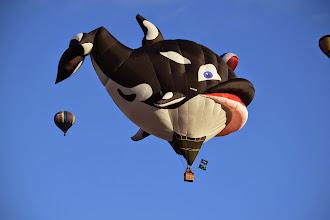 Photo: orca