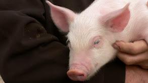 Albert Ein-swine thumbnail