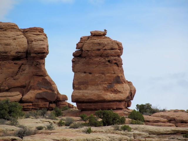 Two hawks on a sandstone pillar