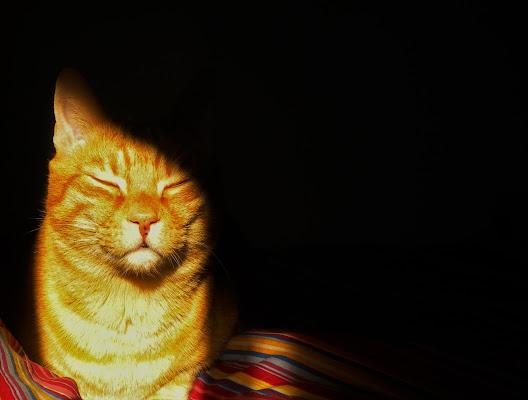 The Super Flaming Cat di legrand