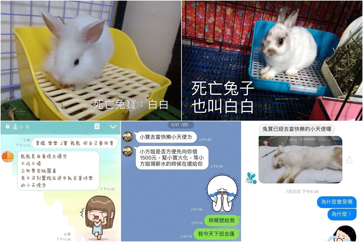 王小姐在兔友社團蒐集資訊,發現目前至少有5隻兔子在溫女接手後死亡,左上為讓事件曝光的「白白」。(對話紀錄左方發言人皆為溫女)