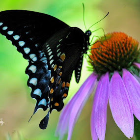 If nothing ever changed, there wouldn't be no butterflies.. by Laks P - Flowers Flowers in the Wild