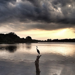 by Lori Taylor - Instagram & Mobile Instagram ( clouds, water, reflection, nature, wildlife, sun )