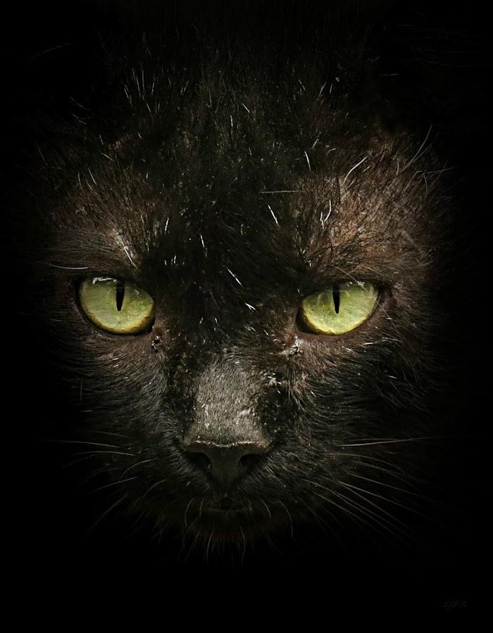 by Ljiljana Popovic Andjic - Animals - Cats Portraits