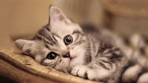 Cuddly Kittens thumbnail