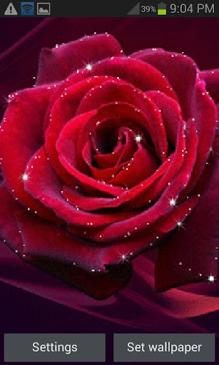 Red Rose Shine LWP