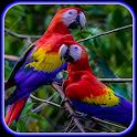 Cute Parrot Wallpaper icon