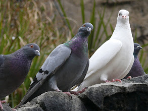 Photo: 23.The Pigeons