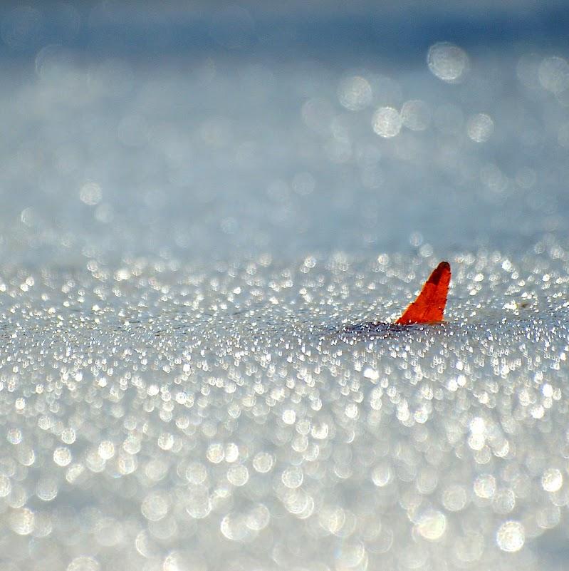 In un mare di ghiaccio... di mariateresatoledo