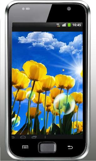 Tulips n Sunny Sky