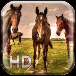 Horses Live Wallpaper HD